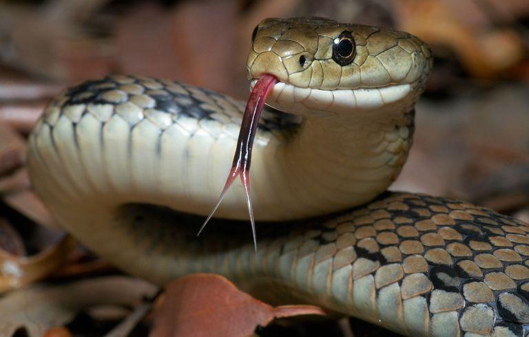 Cuidado com a serpente!