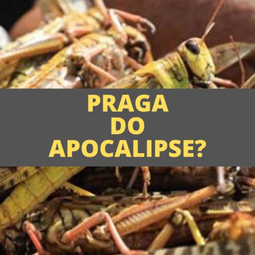 PRAGA DE GAFANHOTOS: Praga do Apocalipse? Sinal do Fim do Mundo?